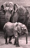 Jack Wins the Elephant by author Rosanne Tolin